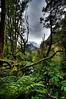 Rainforest and mountain - detail enhanced version