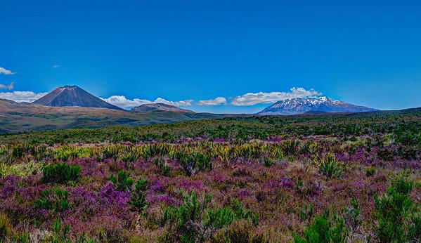 Summer in Tangariro National Park, New Zealand