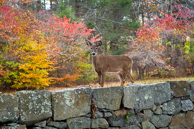 2013_Fall Colors_DSC_7520