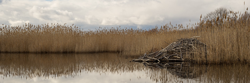 Beaver Hut - Parker River Wildlife Refuge