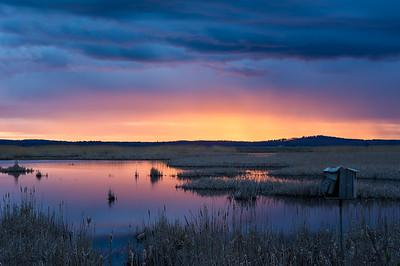 Plum Island Tidal Marsh