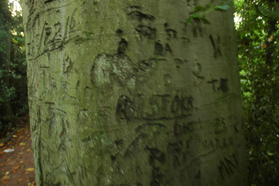 "Carvings on the tree note ""IB 5-22-61' and ""M Stokes 61"" along with many others"