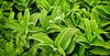 Pretty green plants in Alaska