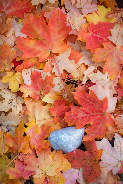 Sedona Autumn Leaves