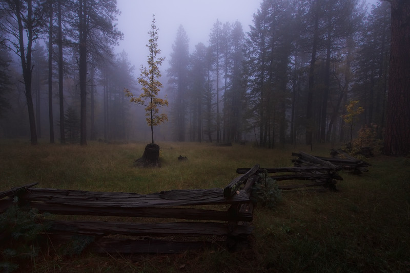 Foggy evening on the Mogollon Rim - Rim Road