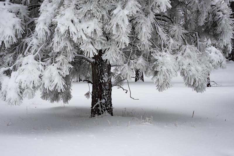 Mingus Snow IV