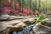 Autumn Creekbed