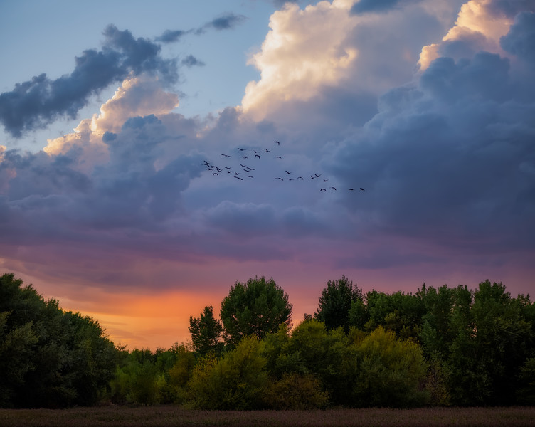 Flock at Sunset