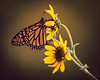 Butterfly and Sunflowers