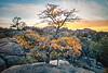 Spring Oak Tree