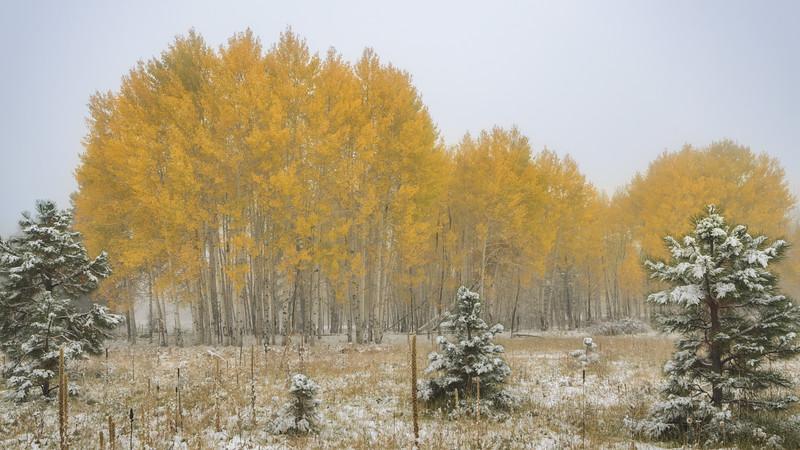 Winter in Autumn