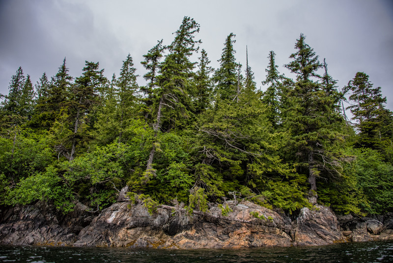 Interesting trees along Tatoosh Island, near Icy Straight, Alaska