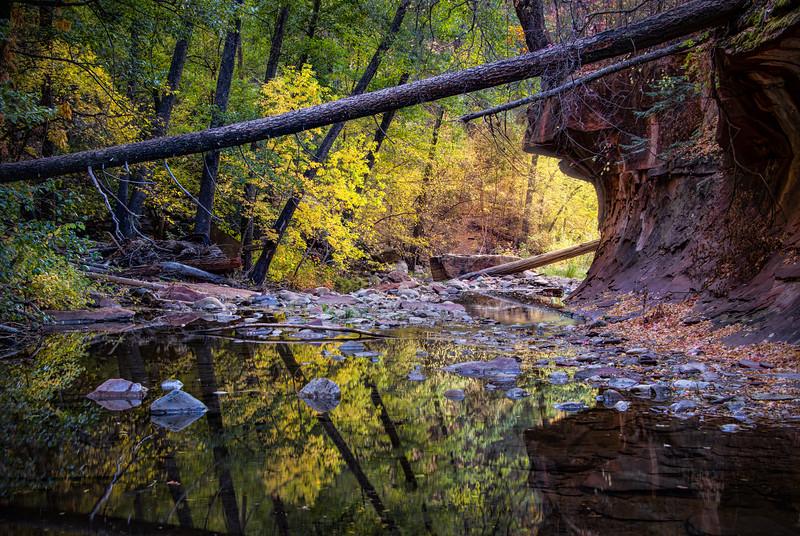 Fallen Autumn Trees