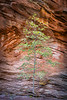 Sandstone Tree