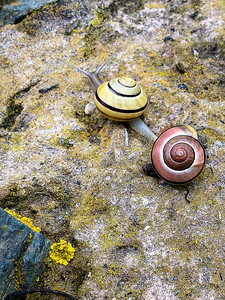 Taking the Cliff Walk at a snail's pace