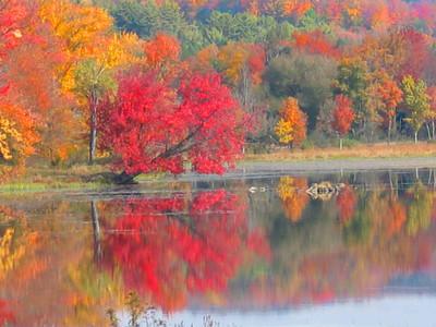 Briscoe Lake (33026454)