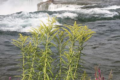 NiagaraFalls015