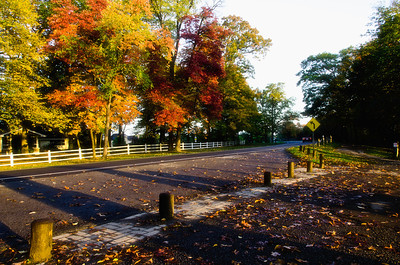 Riot of colours along Niagara Parkway