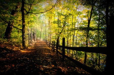 A trail along Niagara Parkway