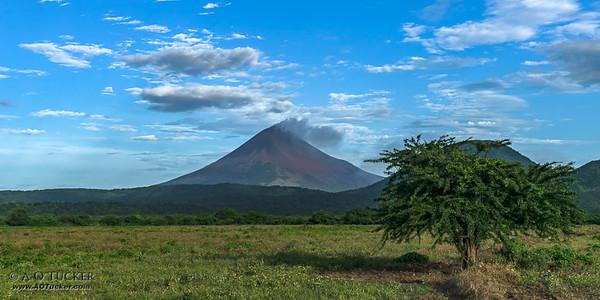 Tree And Volcano