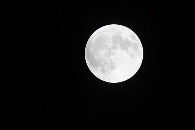 2015 Lunar Eclipse, taken from my backyard on Long Island, NY.