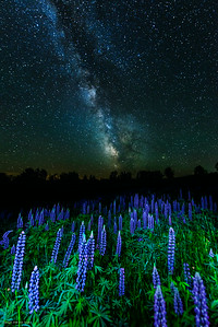 Lupines under the Milky Way. Taken near Mingo Springs Golf Course in Rangeley.