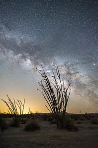 Octillo under the Milky Way, Anza Borrego