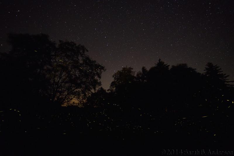 Big Dipper above, firefly trails below
