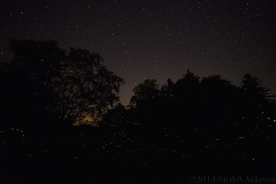 Big Dipper above, firefly trails below
