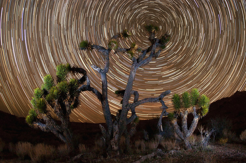 Star trails wrap around the north star behind a Joshua tree in the southern Utah desert