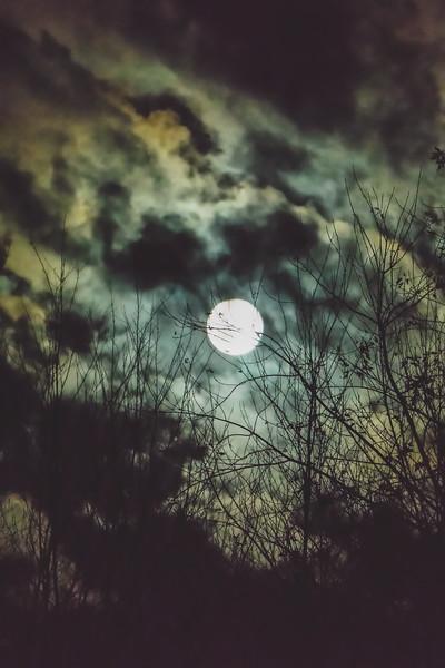 The Beaver Moon 2016