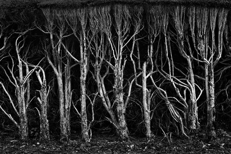 Hedge, The Lake District