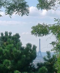 Eiffel Through Trees
