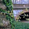 Central Park, Spring break
