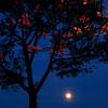 Moon over Sugar Hill, Harlem