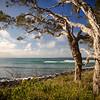 Noosa shoreline - trees
