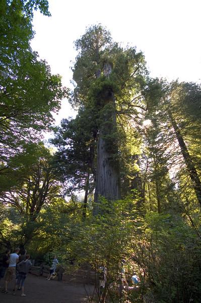"""Big Tree"" draws a crowd."