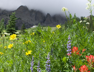 Wildflowers at Mt. Sneffels, Landscape