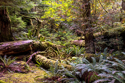 Canadian Rainforest