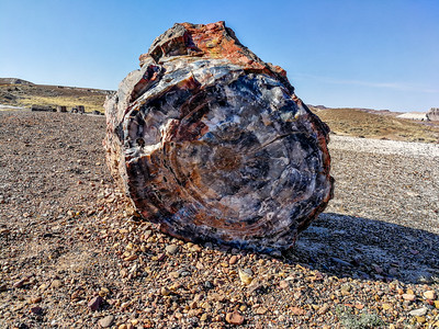 Petriefied Log