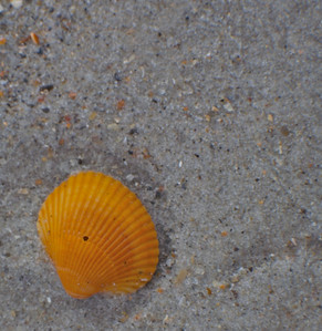 October Beach 4
