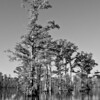 Rhodes Pond NC Wildlife Resource Commission