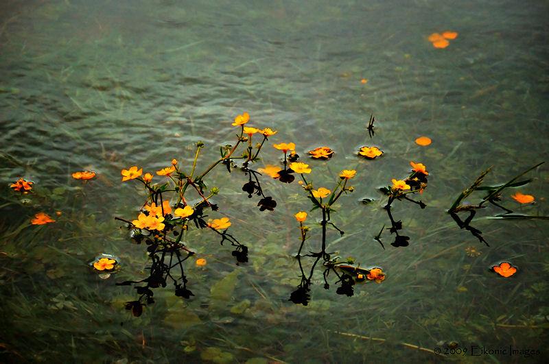 Drowning Meadow