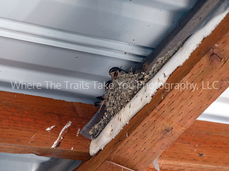 15.  Swallows Nest, Lake Chelan National Recreation Area