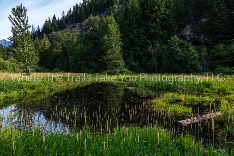 18.  Morning Meadow Scenery Along Stehekin Valley Road, Lake Chelan National Recreation Area