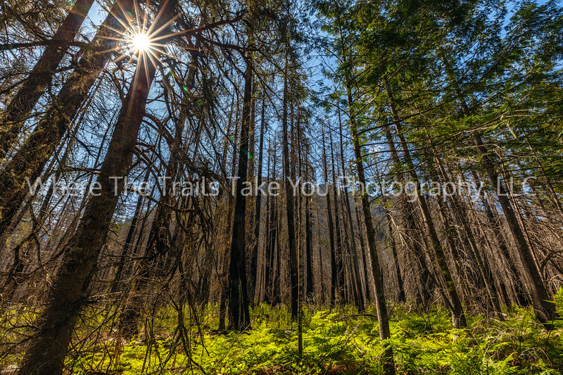 23.  Sunstar Through The Trees