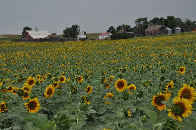 Farm in 2012