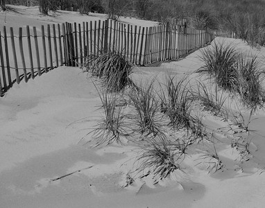 Sand Fence BW North End 9-11-09  008