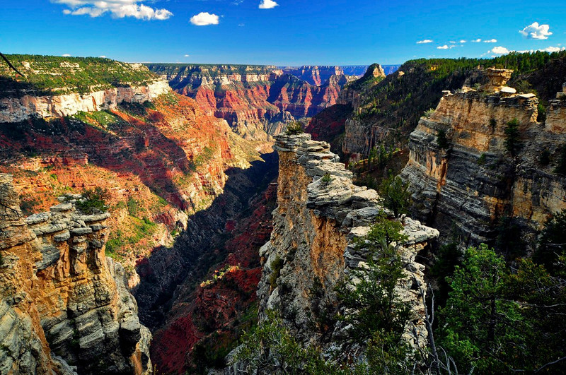 The Transept, North Rim, Grand Canyon National Park.