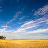 The sky over wheat fields